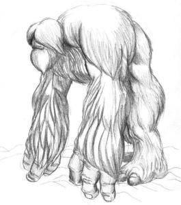 Dibujo de Sascuash